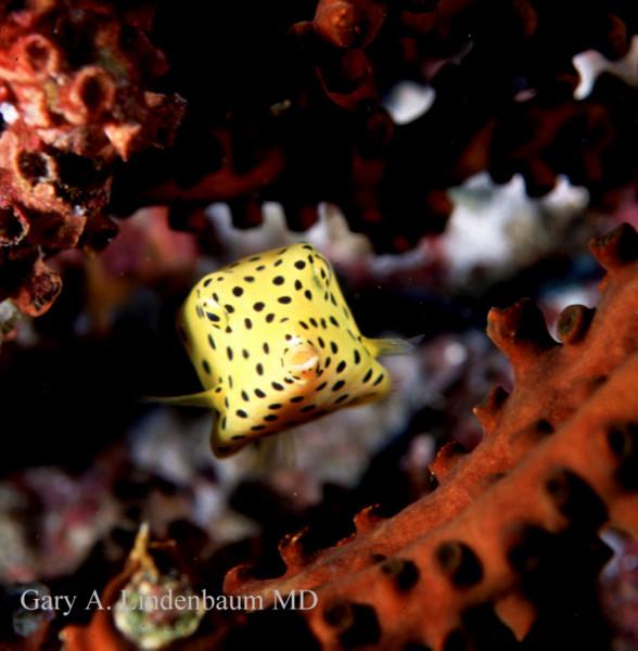 boxfish2.JPG