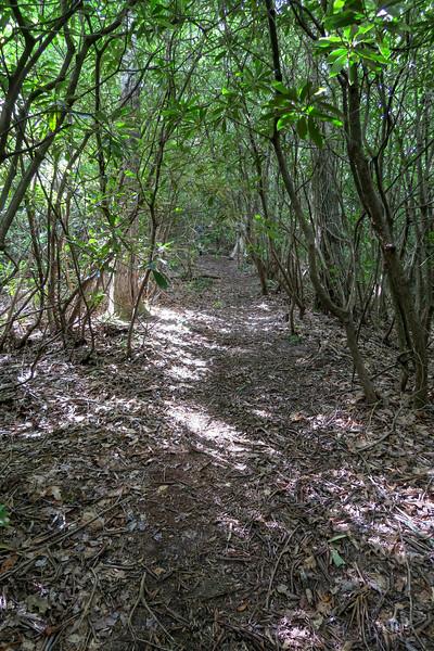 Green Mountain Trail -- 3,300'