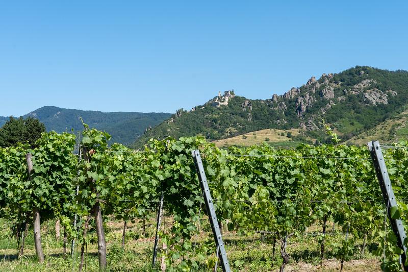 Vineyard in the Wachau Valley in Austria