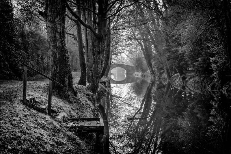 Ripon canal and robin-1.jpg