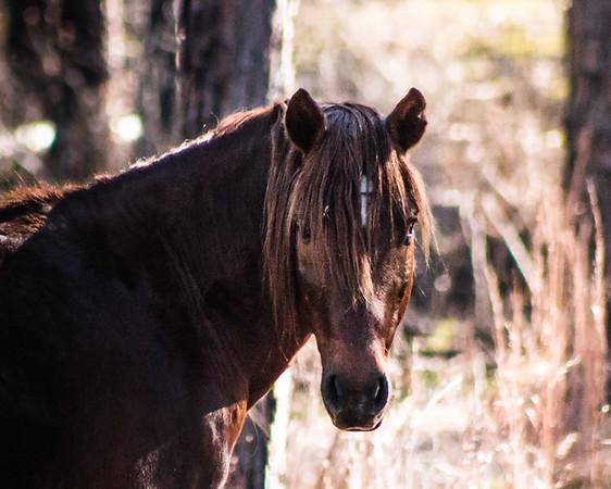 Wild Horses Ft. Polk, LA