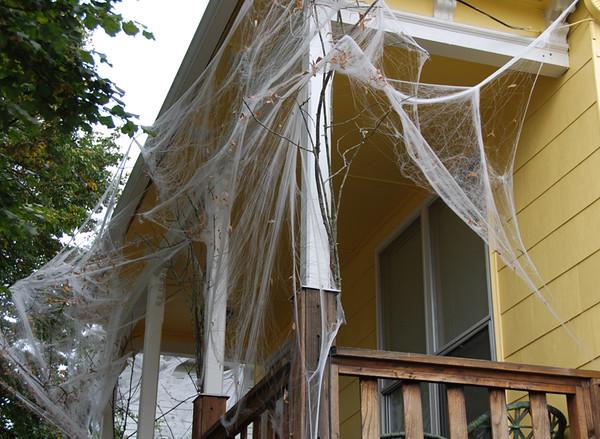 1030 spider web.jpg