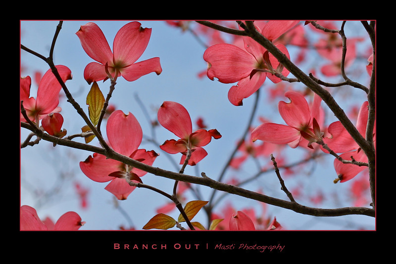 BranchOut-v3.jpg