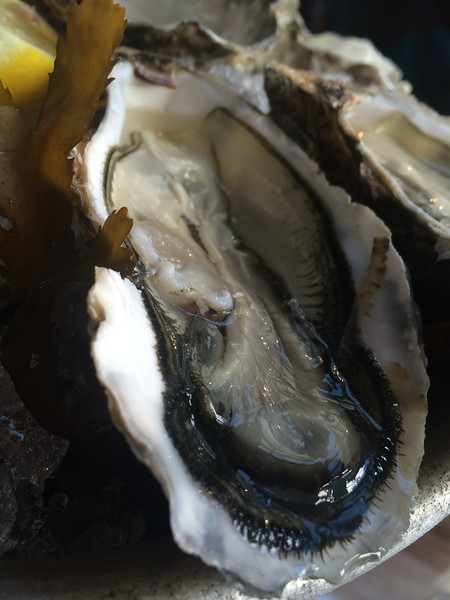 Arcachon - Best oysters in the world