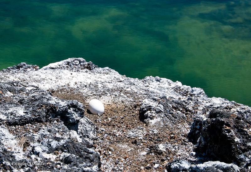 Abandoned egg near the tidal pool on Punta Moreno, Isabela Island