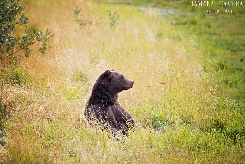 Bear2-10-2.jpg