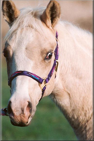 Master The Gold Foal ect