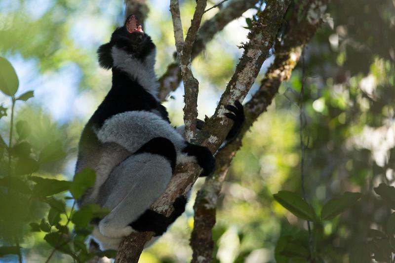 Madagascar_2013_FH0T9313.jpg