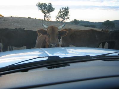 Stillwaters Ranch Work Weekends