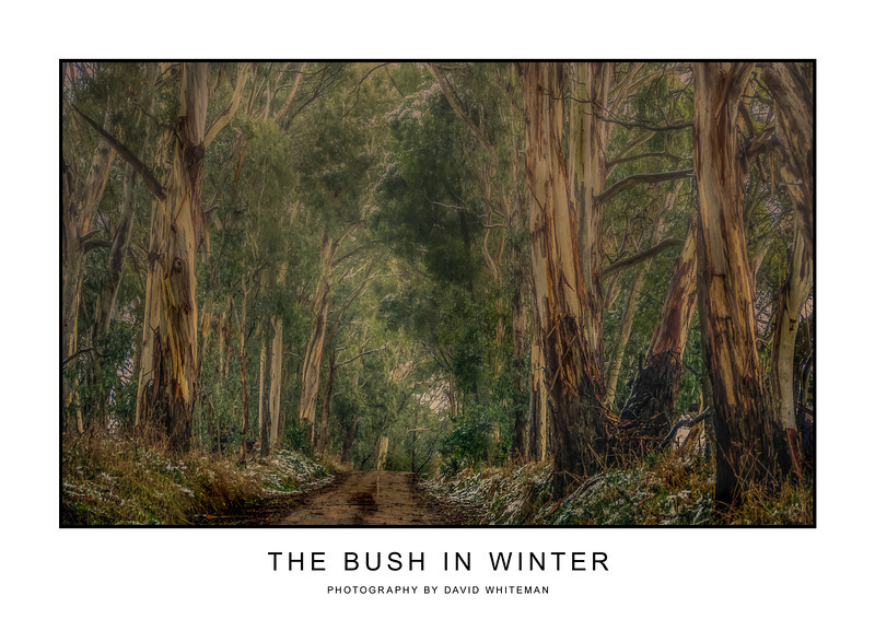 The Bush in Winter