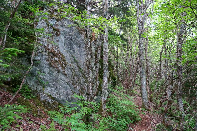 Green Mountain Trail -- 5,650'