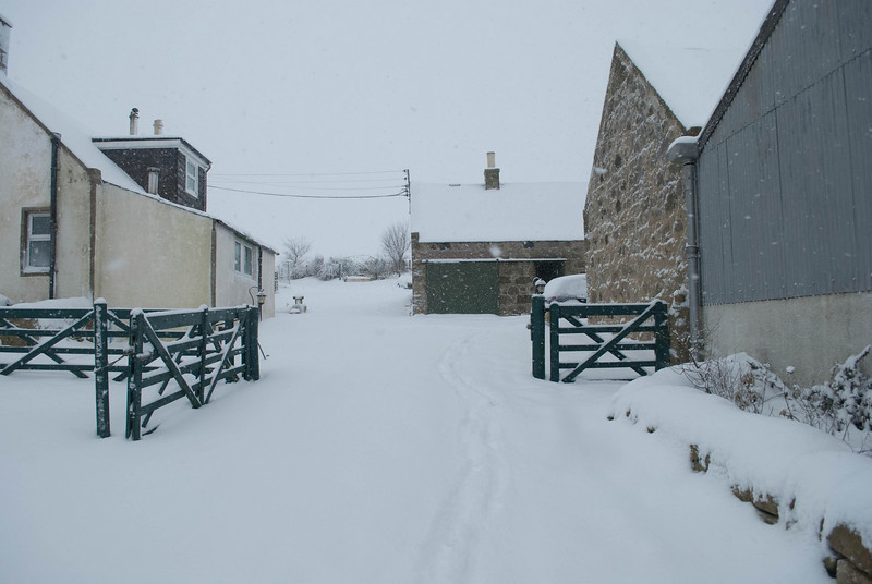 Scroghill Snow (4 of 4)