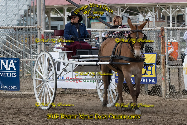 386 Coyotes Royal Ruby Coyote Mule Company Steffani Lippert