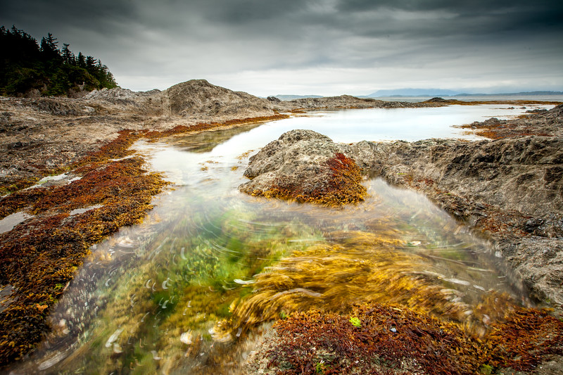 Intertidal zone, Vancouver Island, British Columbia