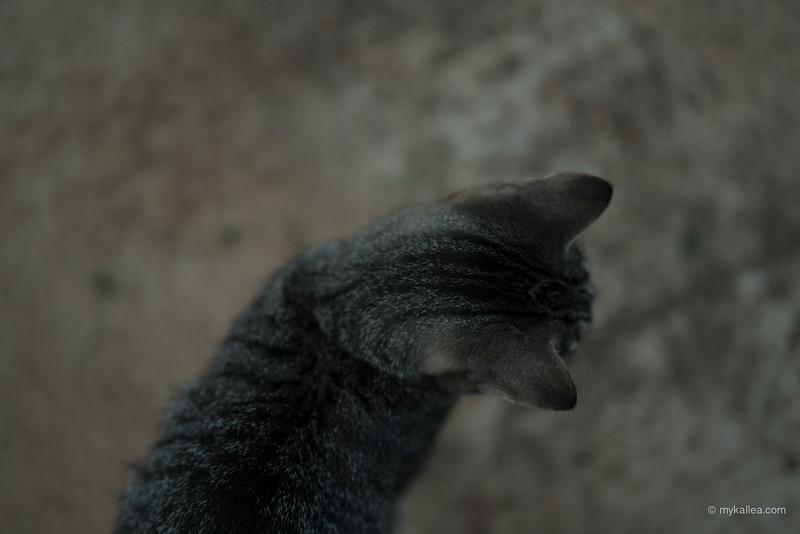 Pets-38.jpg