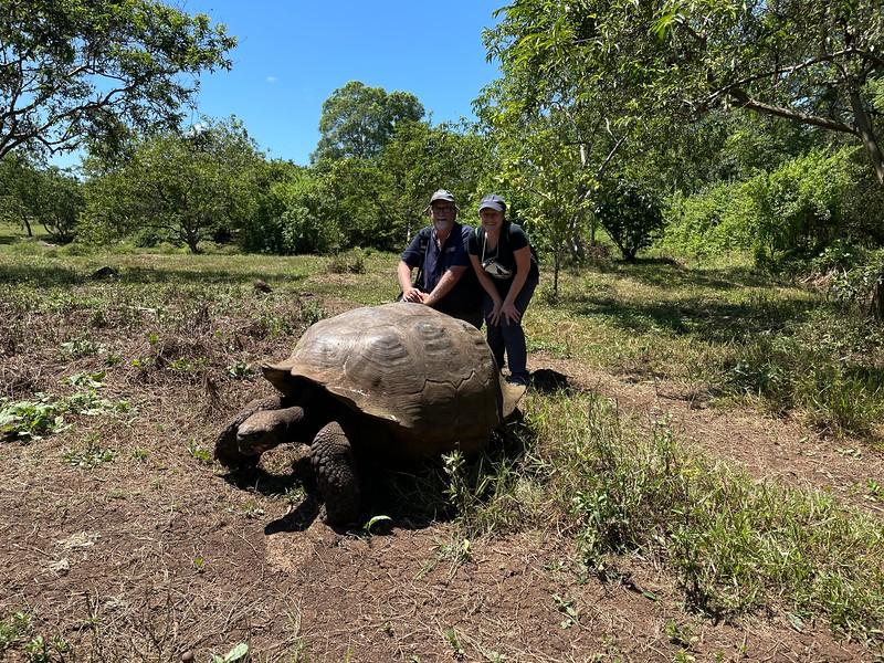Giant Tortoise - Galapagos