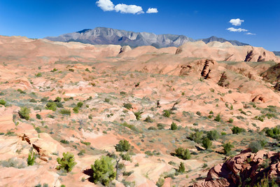 UT-Red Cliffs National Conservation Area
