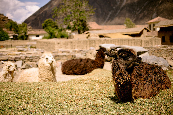 Peru_126.JPG