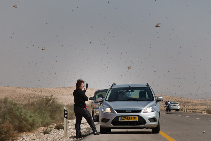 . Israelis stop to take photos as they drive through a swarm of locusts arriving over the Negev desert near the Egyptian border on March 6, 2013 in Kmehin, Israel. Egypt and Israel have been swarmed with millions of locusts over the past few days causing wide spread disturbances.  (Photo by Uriel Sinai/Getty Images)