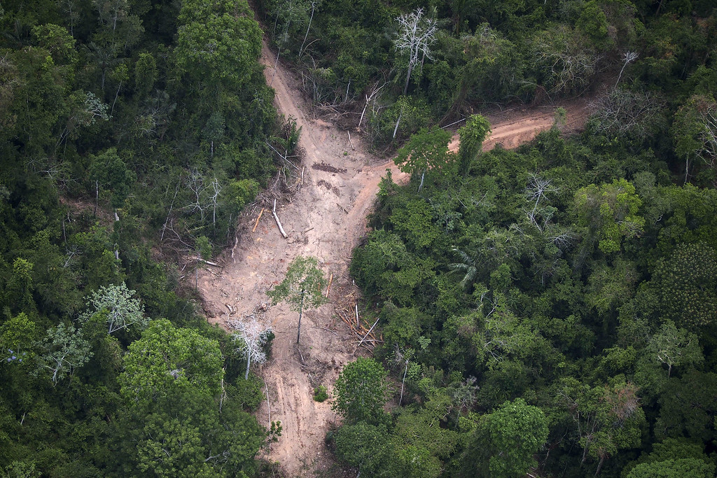 """. View of an illegal felling area in the Amazon jungle during an overflight by Greenpeace activists over areas of illegal exploitation of timber, as part of the second stage of the \""""The Amazon\'s Silent Crisis\"""" report, in the state of Para, Brazil, on October 14, 2014. RAPHAEL ALVES/AFP/Getty Images"""