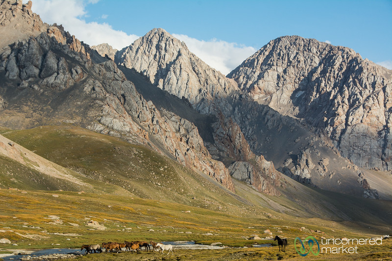 Horses on the Jailoo (Pasture) - Alay Mountains, Kyrgyzstan