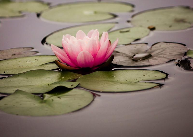 KoRedfield-Floral19.jpg