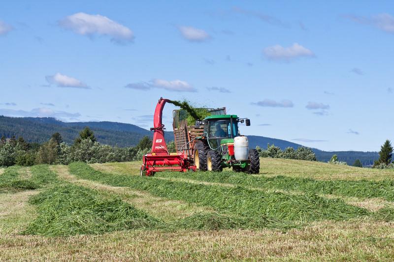 Høsting av gras med finsnitter