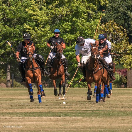 Wine Country Polo Club 2018