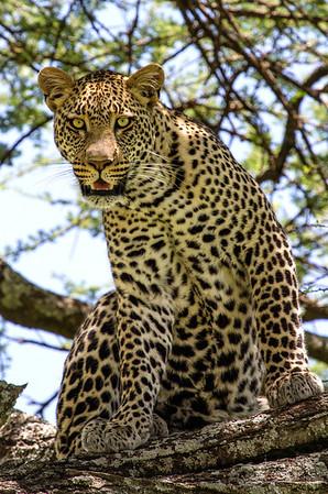 2014 Photo Safari