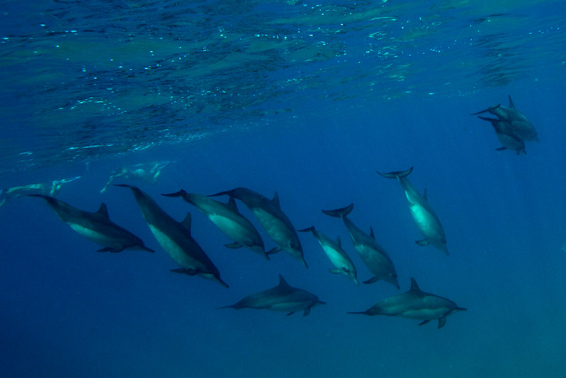 263-SpinnerDolphins-10-15.jpg