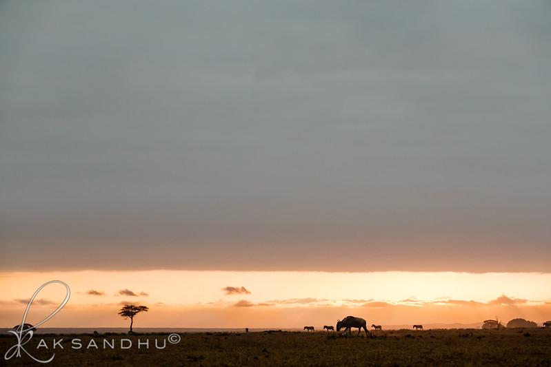 SunInAfrica-010.jpg