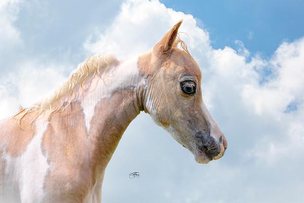 EBFShow+Foals