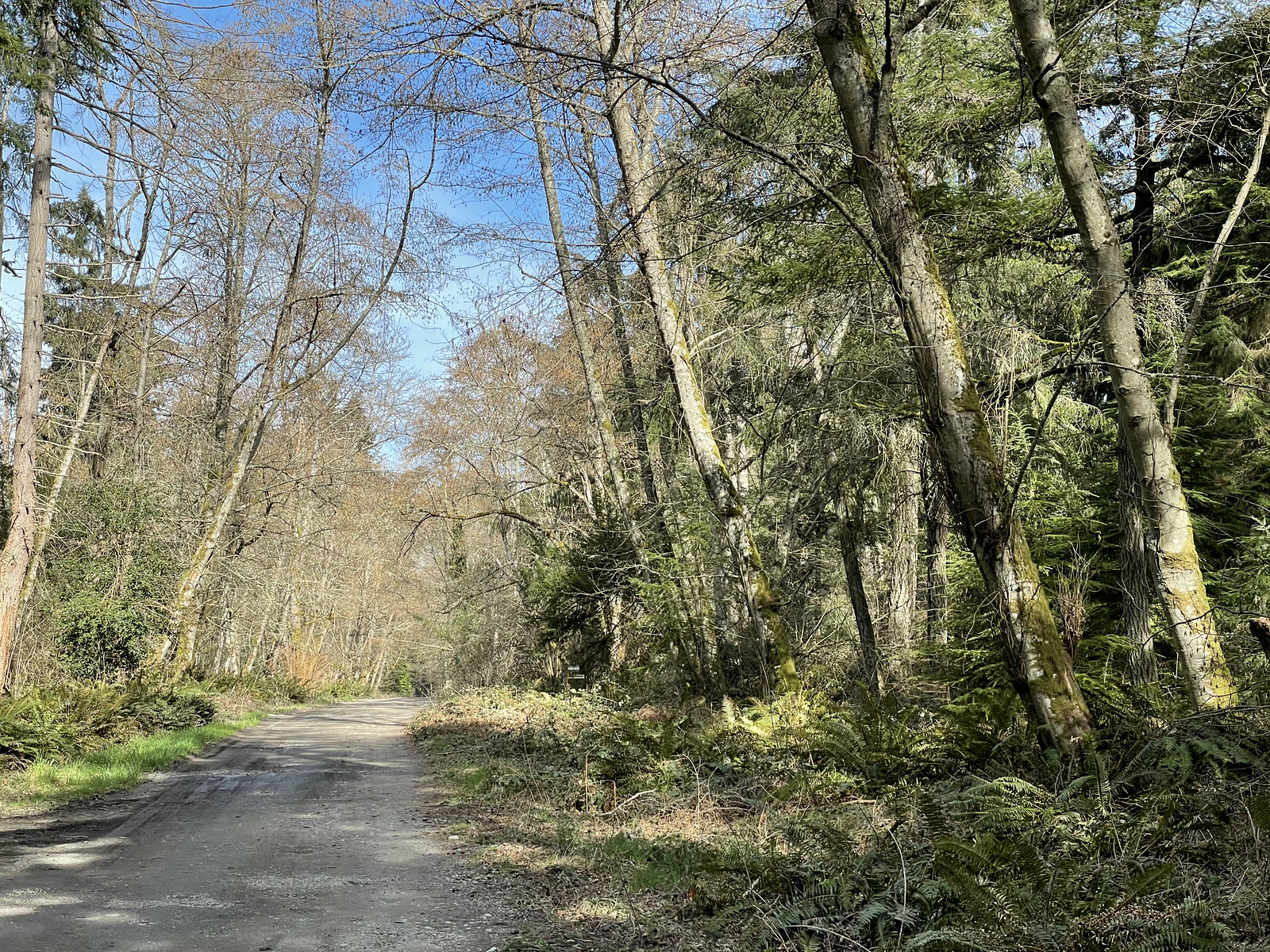 Gravel road leading to connector trails to Dockton Forest