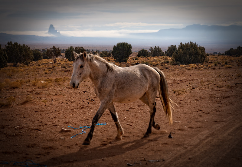 Wild Mustang and El Capitan, Monument Valley