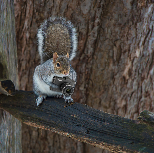 shooter squirrel2.jpg