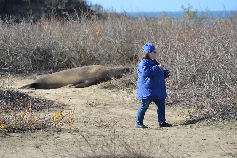 ano-nuevo-elephant-seals-2013 56.jpg