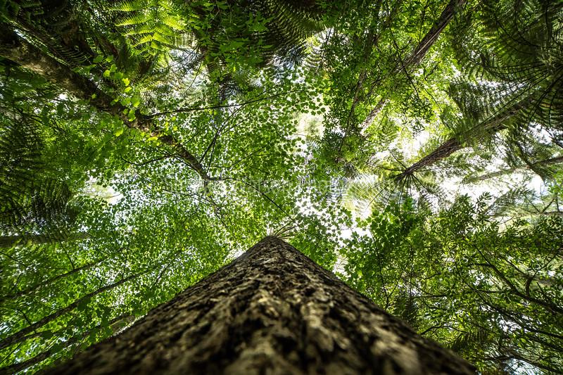 Redwoods Rotorua different perspective