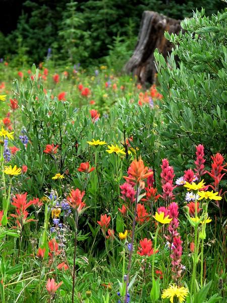 amh FLOWERS (1325).jpg