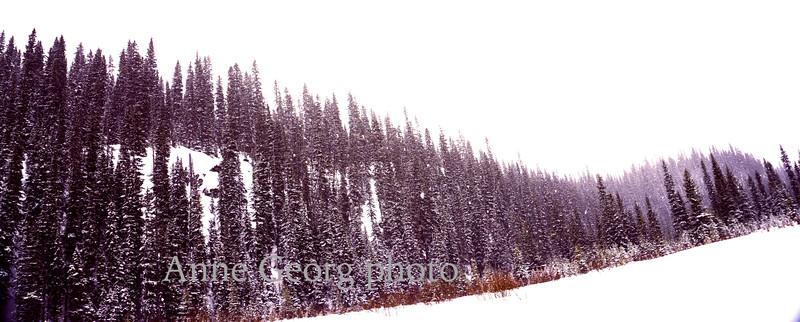 trees-hills-snow.jpg