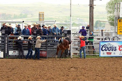 All Bronc Riding