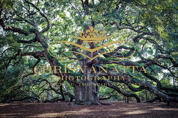 Angel Oak DownCreek Color