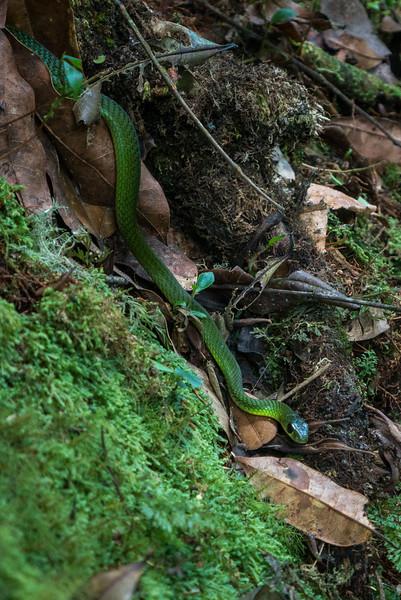 Nyugwe-Rwanda-25.jpg