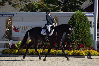 Dressage at Devon 2016