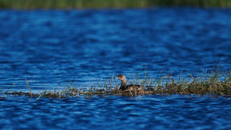20181103 - Brazoria Wildlife Refuge-85B_3889.jpg