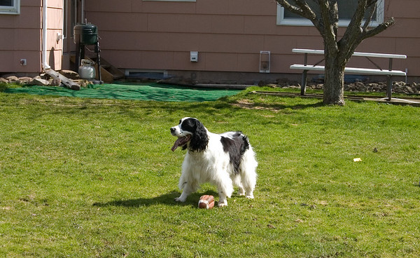 Coda Playing Football 2007-4-3