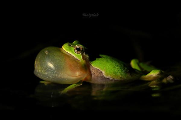 Płazy / Amphibians