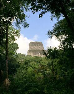 Flores, Tikal, Petén August 2017