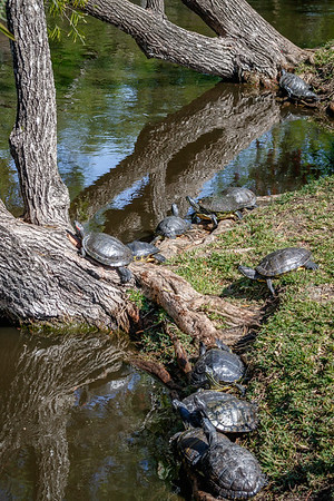 McGough Nature Park, FL  2017