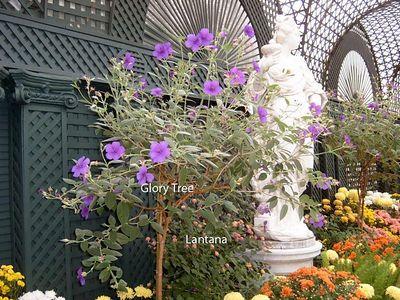 Duke French Garden