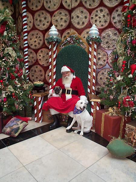 Christmas dogs 12.15.01